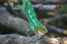 Madagascar Wildlife Conservation Adventure Course Credit Internship