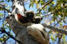 Madagascar Wildlife Conservation Adventure