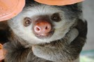 Costa Rica Sloth and Animal Rescue Project