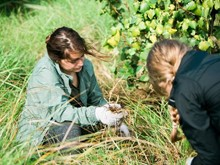 Affordable & Trusted Volunteer Programs in New Zealand