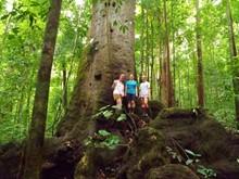 Costa Rica Big Cats, Primates & Turtle Conservation