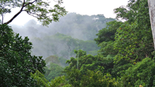 Costa Rica Wildlife Conservation N.G.O Internship