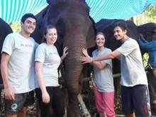 Thailand Elephant Care Experience