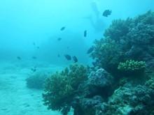 Belize Marine Conservation & Diving