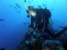Fiji Marine Conservation & Diving Course Credit Internship