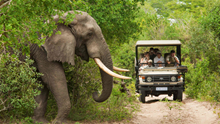 Volunteer with the Big 5 in South Africa