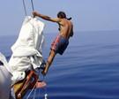 Italy Dolphin Monitoring & Sailing
