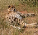 Wildlife Conservation South Africa