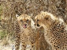 Namibia Wildlife Conservation & Sanctuary