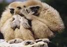 Thailand Gibbon Sanctuary
