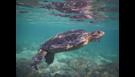 Volunteer & Protect Ocean Wildlife in Ecuador
