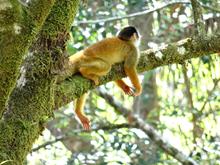 Costa Rica Wildlife Conservation Course Credit Internship