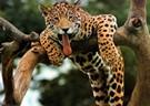 Ecuador Amazon Wildlife Sanctuary