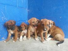 Fiji Animal Health & Welfare