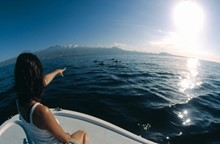 Tenerife Whale & Dolphin Conservation