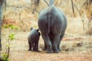 African Wildlife Volunteer Program - £650 for 2 weeks