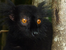 Madagascar Wildlife Conservation N.G.O. Internship