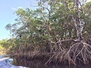 Mangrove Conservation Projects