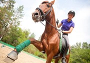 Well Paid Horse Riding Job in America